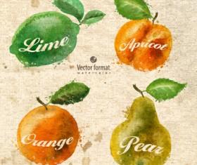 Drawn watercolor fruits vector design set 02
