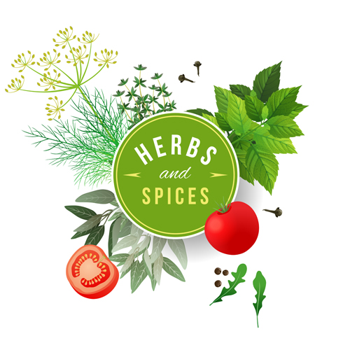 and spices vector ...