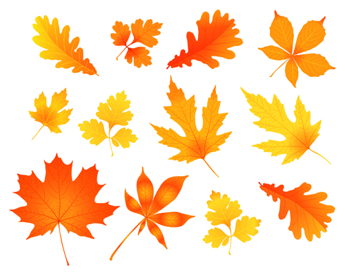 Various autumn leaves vector set material 01