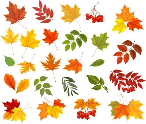 Various autumn leaves vector set material 02