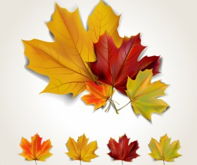 Various autumn leaves vector set material 03