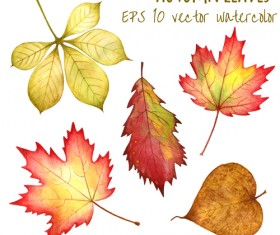 Various autumn leaves vector set material 04