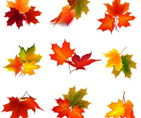 Various autumn leaves vector set material 05