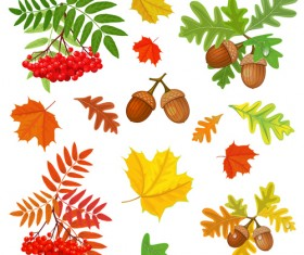 Autumn leaves with fructification vector