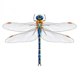 Realistic dragonfly vector material