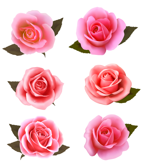 realistic pink roses vector material - vector flower free download