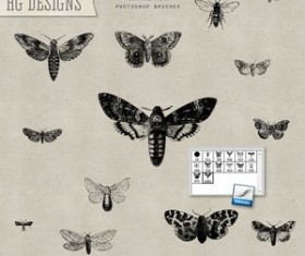 Vintage Moths Photoshop Brushes