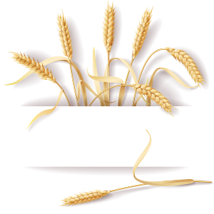 Wheat with paper background vector