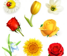 Different flowers design vectors material