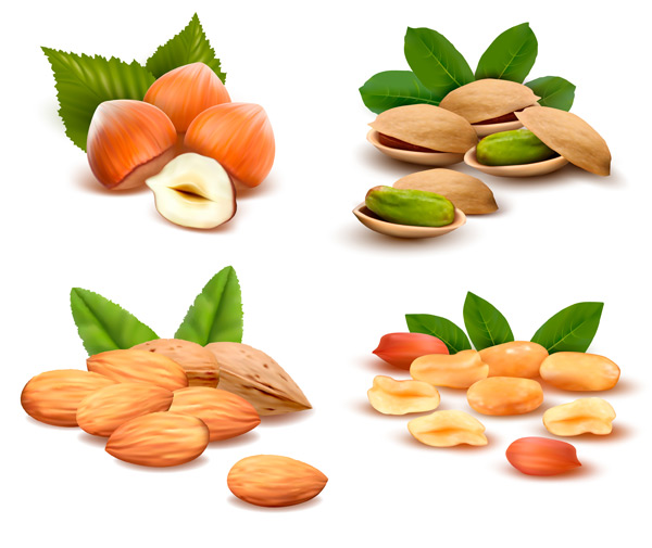 different nuts vector design vector food free download