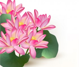 Pink lotus design elements vector