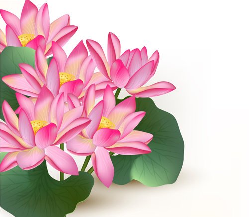 Free ai file pink lotus design elements vector download