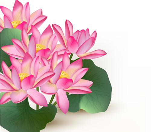 Free Ppt Backgrounds Desktop Wallpaper Flower Pink Lotus: Pink Lotus Design Elements Vector Free Download