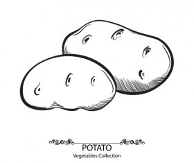 Hand drawn potato vegetables vector material