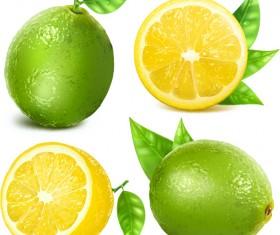 Juicy lemon creative vector 01