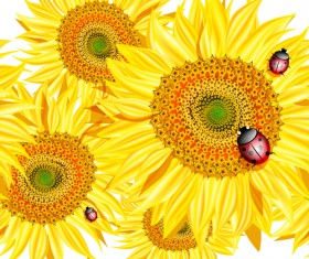 Sunflowers with Ladybird vector