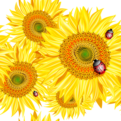 Sunflowers with Ladybird vector