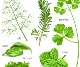 Various herbs vector material 02