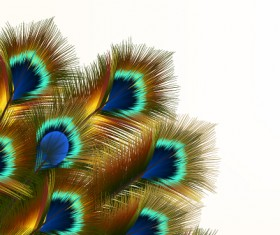 Beautiful peacock feathers background graphics 01