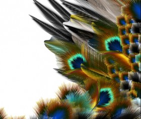 Beautiful peacock feathers background graphics 02