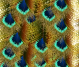 Beautiful peacock feathers background graphics 03