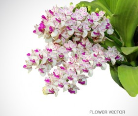 Beautiful purple with white flower vector