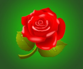 Beautiful red rose psd material