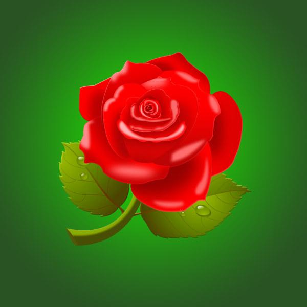 Beautiful red rose psd material