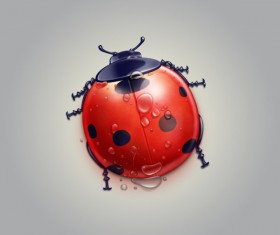 Cartoon Ladybug psd material