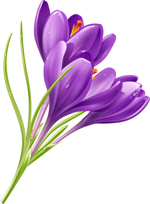 purple flower shiny vector  vector flower free download, Natural flower