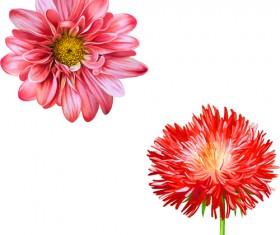 Realistic flowers beautiful vector set 02