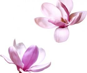 Realistic flowers beautiful vector set 04