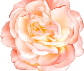 Realistic flowers beautiful vector set 05