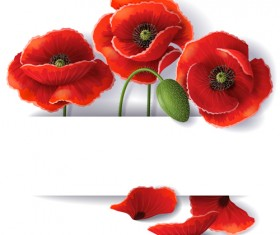 Red poppy with white background vector 01