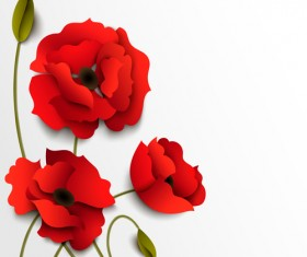 Red poppy with white background vector 02