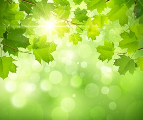Spring sunlight with green leaves background vector 03