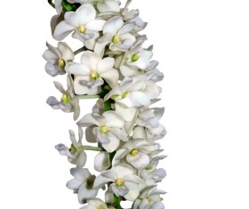 White flower branches vector