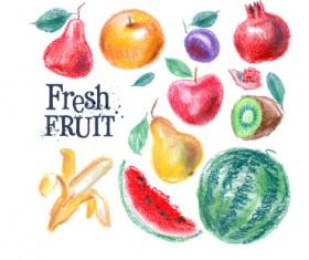 Colored drawn fruits vectors material 01