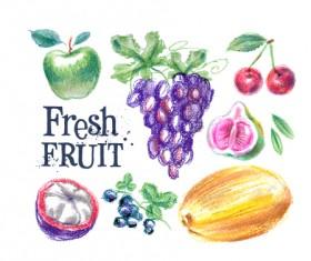 Colored drawn fruits vectors material 05