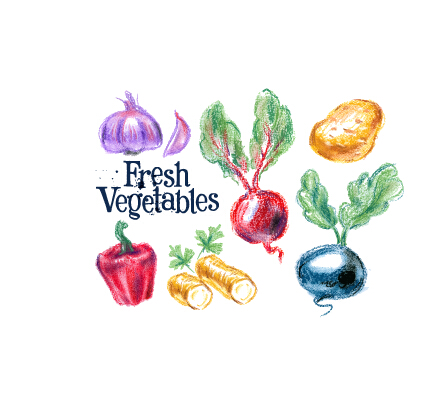 Hand drawn fresh vegetables colored vector 01