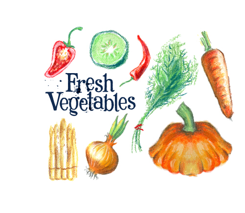 Hand drawn fresh vegetables colored vector 02