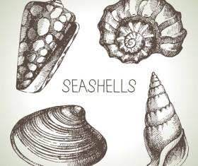 Set of seashell hand drawn vectors material 01