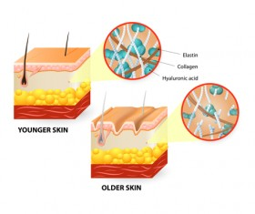 Skin structure diagram vectors material 03