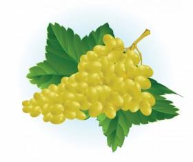 Vector Juicy grapes design graphic set 01