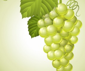 Vector Juicy grapes design graphic set 02