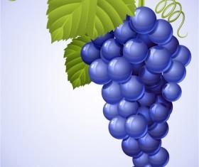 Vector Juicy grapes design graphic set 03