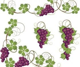 Vector Juicy grapes design graphic set 07