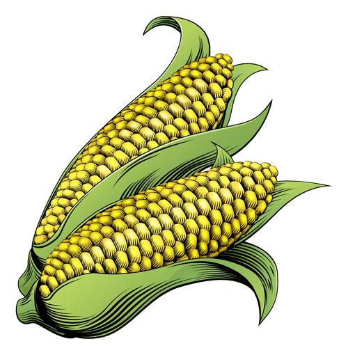 Hand drawn corn vector design 03 - Vector Food free download