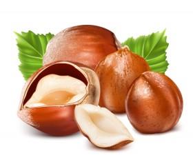 Hazelnut design elements vector