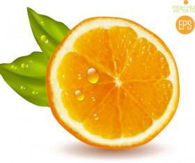 Juicy slice oranges vector set 01